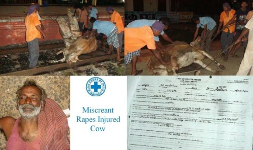 Man-Rapes-Cow