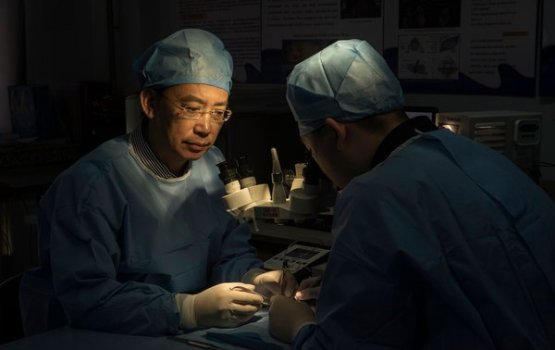 Doctor Prepares To Perform First Full Body Transplant