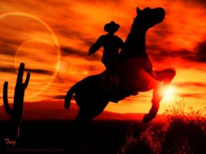 Cowboy of the American West
