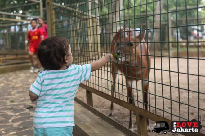 tasha may_we love jakarta_welovejakarta_kids in jakarta_Ragunan Zoo_what to do with kids in Jakarta