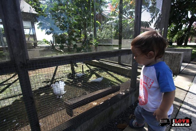 Birds at Kuntum Bogor_Quantum Nursery Bogor_Kuntum Farmfield Bogor_Tasha May_welovejakarta_we love jakarta_jakarta with kids_kids in indonesia_what to do with kids on the weekend in jakarta