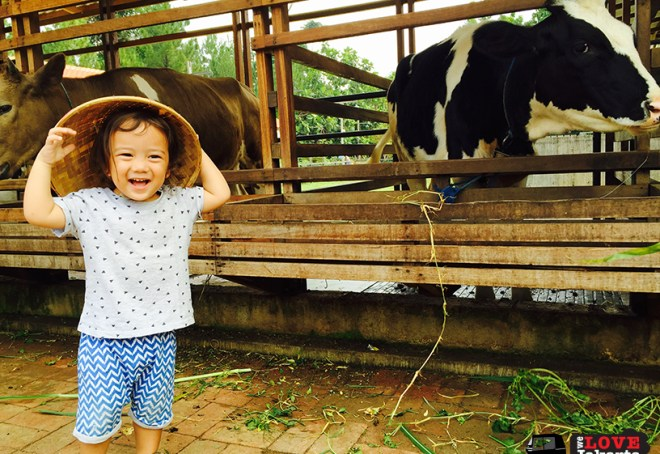 Tasha May_We love jakarta_Kuntum Nurseries_feeding cows