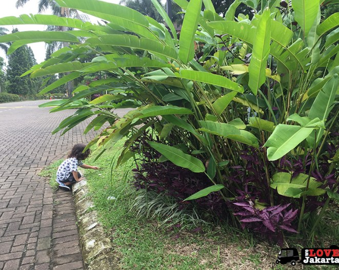 Exploring nature in Bogor