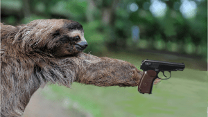 sloth and gun