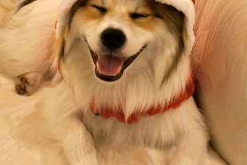 puppy-in-santa-hat