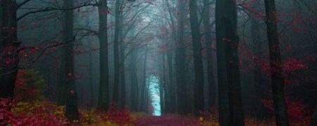 autumn-forest-germany_35651_990x742