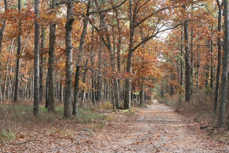 New-Jersey-Pinelands-