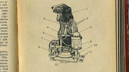 dogshead