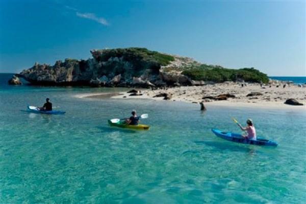 Kayaking Penguin Island