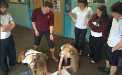 Pupils take a course in alcohol awareness