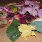 Easy Autumn Wreath