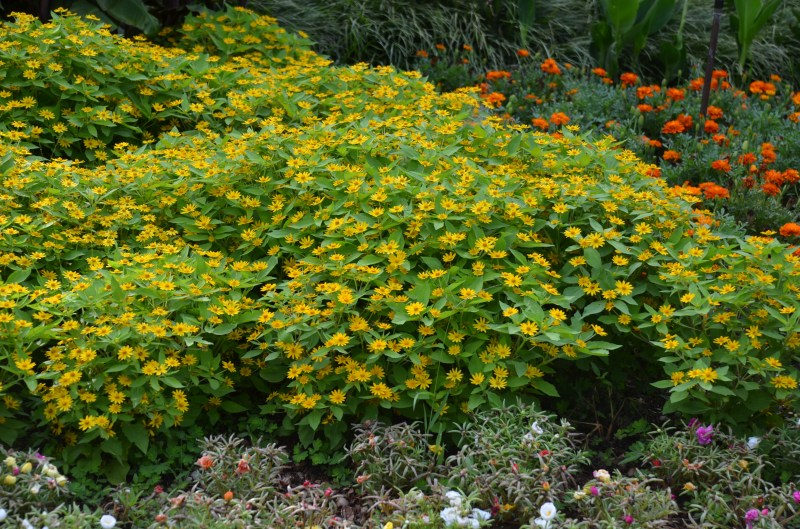 Large Of Ground Cover Seeds