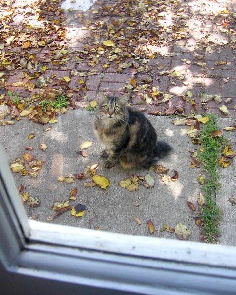 Bobitha at the door