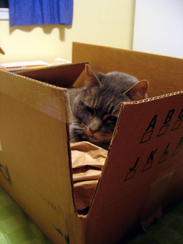 Maggie in the box