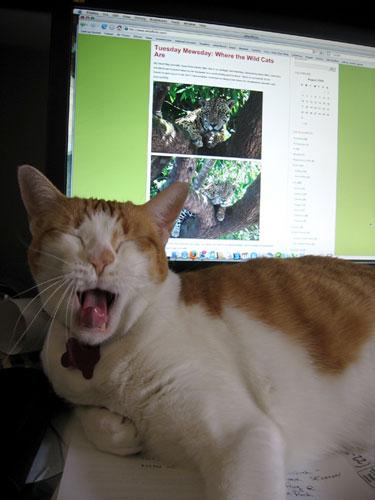 Damian yawning