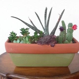 Reader Showcase – Succulent Garden