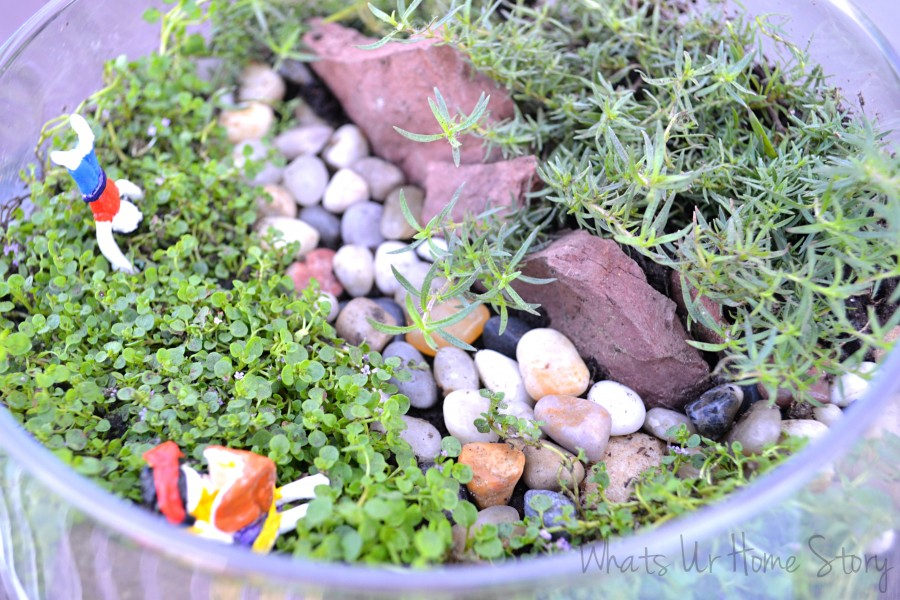 Miniature Garden, How to make a terrarium, air dry clay figurines, corsican mint, Orange scented Thyme