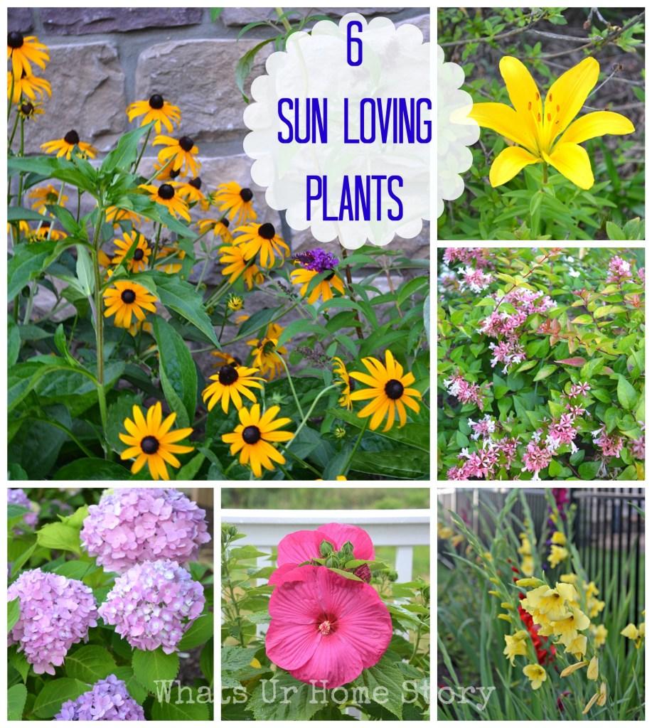 6 sun loving plants, summer garden