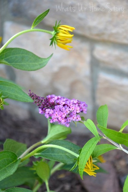Whats Ur Home Story: side yard bed, sun loving plants, butterfly bush