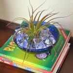 decorating with air plants, Tillandsia, air plant terrarium