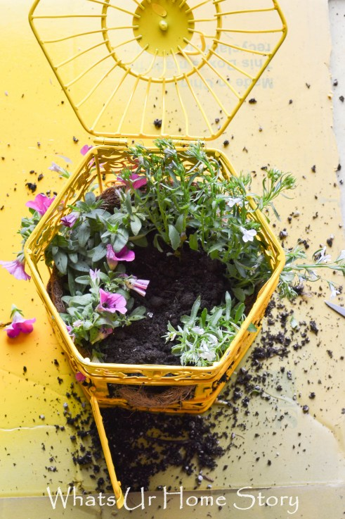 Bird Cage Planter how to