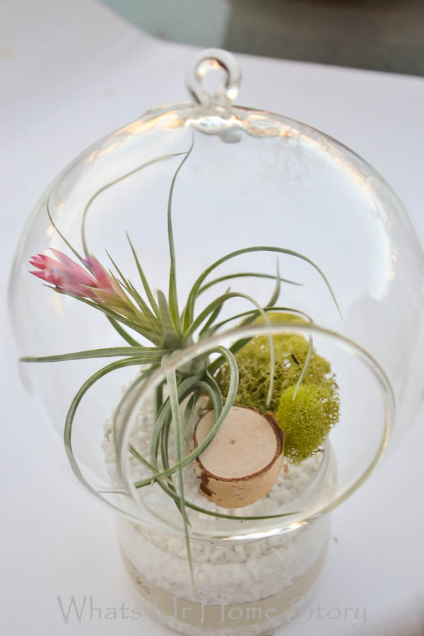 DIY Terrarium With Air Plants Whats Ur Home Story