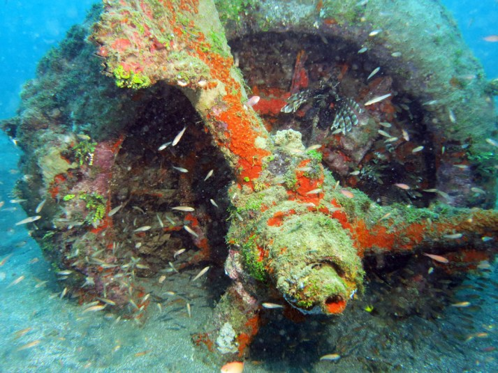 0651-Engine-with-lionfish-at-Dauntless-Wreck-Munda-diving-Solomon-Islands-DPI-0651