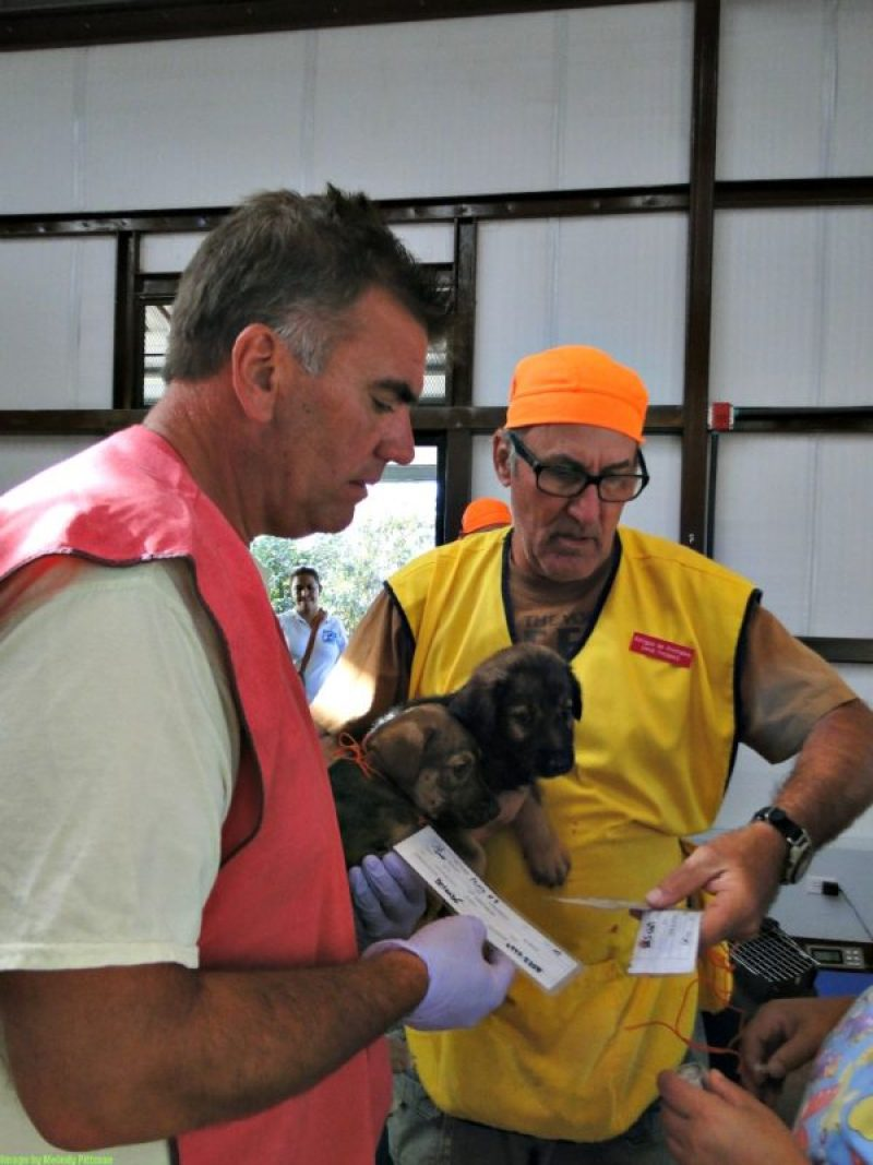 boquete spay and neuter clinic
