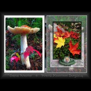 #3001 Autumn In Miniature Notecard