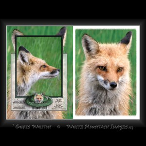 #2018 Red Fox Notecard