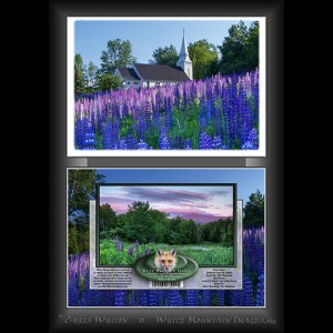 #2032 Lupine Church Notecard