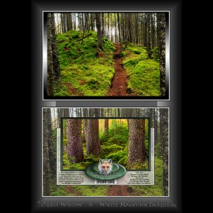#2043 Pittsburg Fairy Forest Notecard