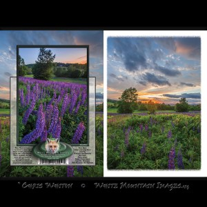 #2058 Sunset over Lupine Notecard