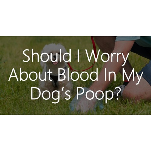 Medium Crop Of Blood In Dog Poop