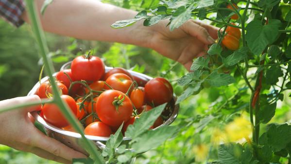 pomodori e sapore