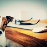 Can Dogs and Cats Live Peacefully Together?