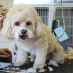 The Right Way of Using Dog Clippers At Home