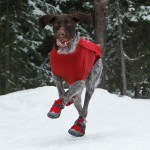 Winter Weather Tips for Dog Care