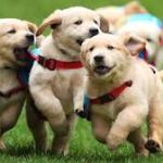 The Different Functions of Service Dogs