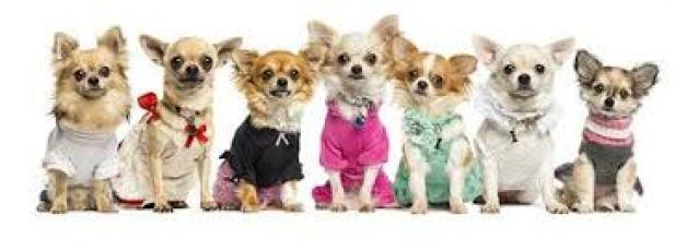 fashiondogs