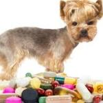 Essential Vitamins for Your Dog