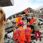 How to Handle a Natural Disaster When You Have Pets