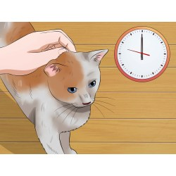 Small Crop Of Cat Head Pressing
