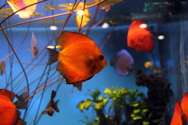 Man arrested in suspected fish thefts at Burbank Glendale pet shops