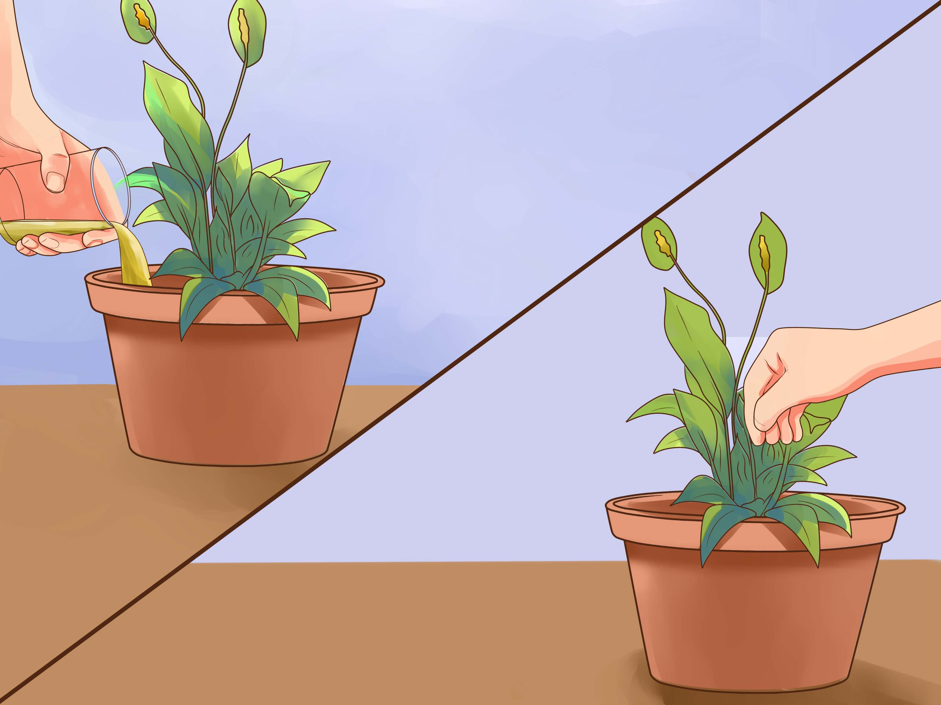 Impressive Yellow Peace Steps Wikihow Peace Lily Brown Leaves Tips Peace Lily Brown Leaves How To Care houzz-03 Peace Lily Brown Leaves