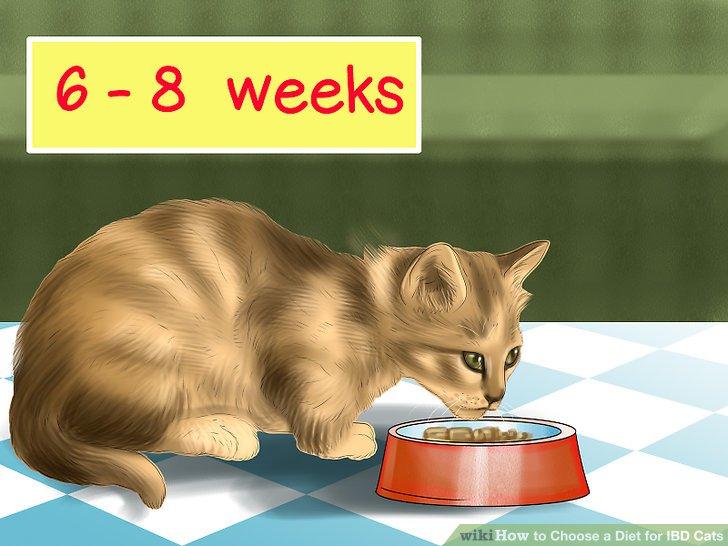 Best Cat Food For Feline Ibd