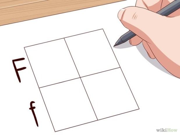 Make a Punnett Square Step 4 Version 2.jpg