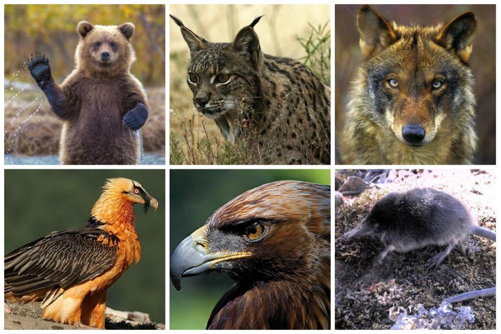 Zes Diersoorten Die Met Uitsterven Bedreigd Worden In Spanje