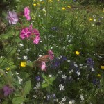 wildflower garden in May