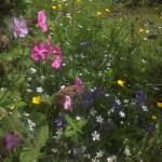 wildflower garden in May
